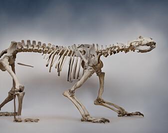 Da isbjørnen fra istiden ble funnet på Finnøy