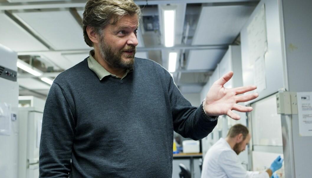 Steinar Madsen i Statens legemiddelverk opplyser at bruken av ibuprofen nå skal tas opp på europeisk toppnivå etter at en dansk undersøkelse konkluderer med at unge menn kan få et testosteronnivå som en 70-åring ved bruk av virkestoffet. (Arkivfoto: Berit Roald, NTB scanpix)