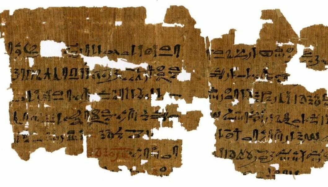 Baksiden av denne 3500 år gamle papyrusen handler om graviditet. Teksten forteller hvordan man bestemmer barnets kjønn ved å tisse i poser med bygg og hvete. (Foto: Københavns Universitet/Papyrus Carlsberg Samlingen)