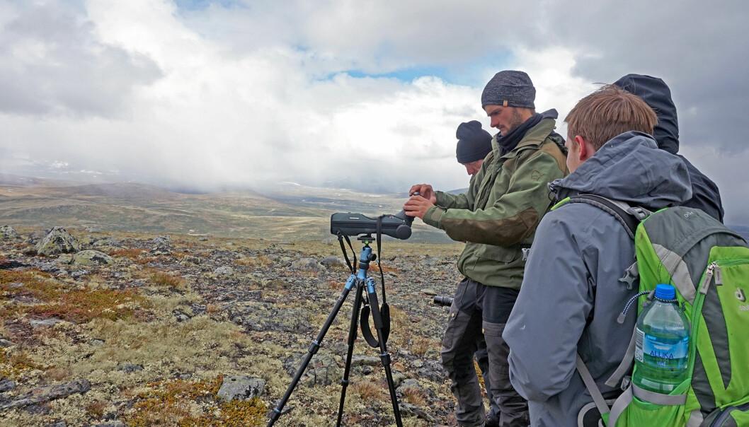 Safarituristene ble stumme av begeistring da de fikk øye på en moskusfamilie i guidens teleskop. (Foto: Hilde Nikoline Hambro Dybsand)
