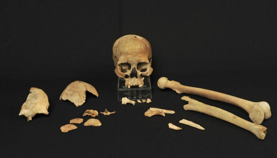 Steinalderknoklene fra Hummerviksholmen i Søgne ble funnet i 1994. I dag har vi endelig gode nok metoder til å analysere restene av DNA som finnes i beina.  (Foto: Beate Kjørslevik)
