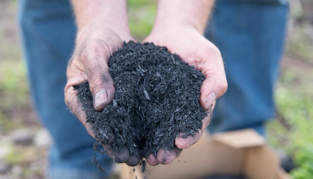 Er det mulig å produsere en gjødselblanding som både reduserer klimagassutslipp og gir like god avling som kunstgjødsel? (Foto: Anette Tjomsland)