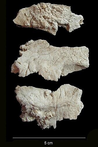 Noen av de kremerte beinrestene fra Stonehenge. (Foto: Christie Willis)