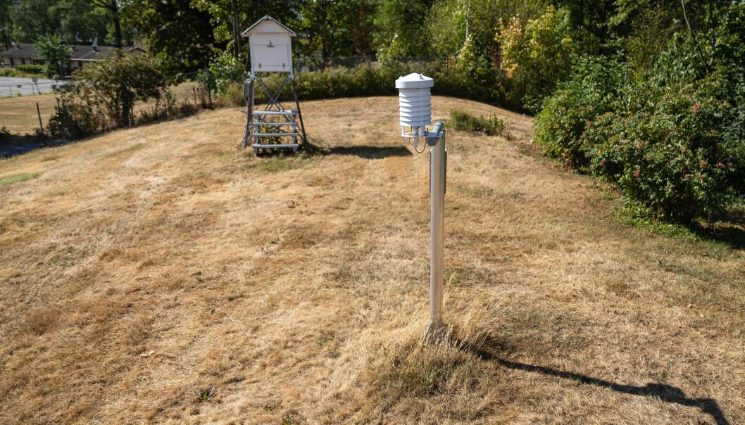 Den uvanlige sommervarmen og tørken har satt spor også hos Meteorologisk institutt i Oslo. Temperaturmålingene herfra er med i en fersk europeisk rapport om hetebølger. (Foto: Audun Braastad/NTB scanpix)