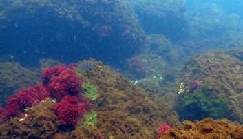 – Forsuring har allerede ført til dramatiske endringer i havet