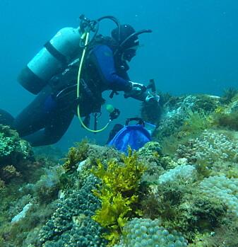 Her svømmer en av forskerne rundt i et område med dagens normale mengde CO2 i vannet. (Foto: privat)
