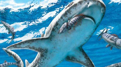 Haien blomstret i skyggen av masseutryddelsen
