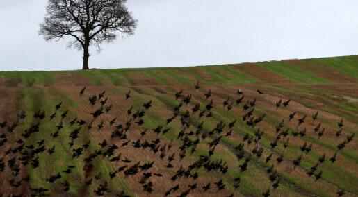 Bønder kan redde fugler