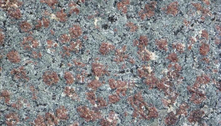 Eklogitt består av røde granat-mineraler og grønn pyroksen. Bergarten ble dannet dypt i jordskorpen under den kaledonske fjellkjededannelsen. (Foto: Ane K. Engvik)