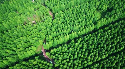 Det blir flere trær i verden, men regnskogene krymper