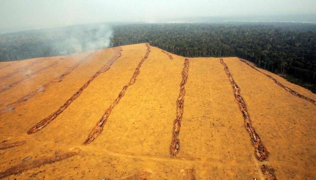 Dette bildet viser en åker i nærheten av byen Santarem opp mot regnskogen i Brasil. Bildet er fra 2004, og viser trenden i årene siden 1982. (Bilde: AP Photo/Victor R. Caivano/NTB Scanpix)