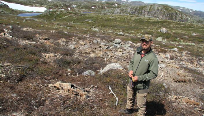Steyaerts kollega Shane Frank inspiserer området. Forskningen her oppe vil trolig fortsette i mange år. (Foto: Sam Steyaert)