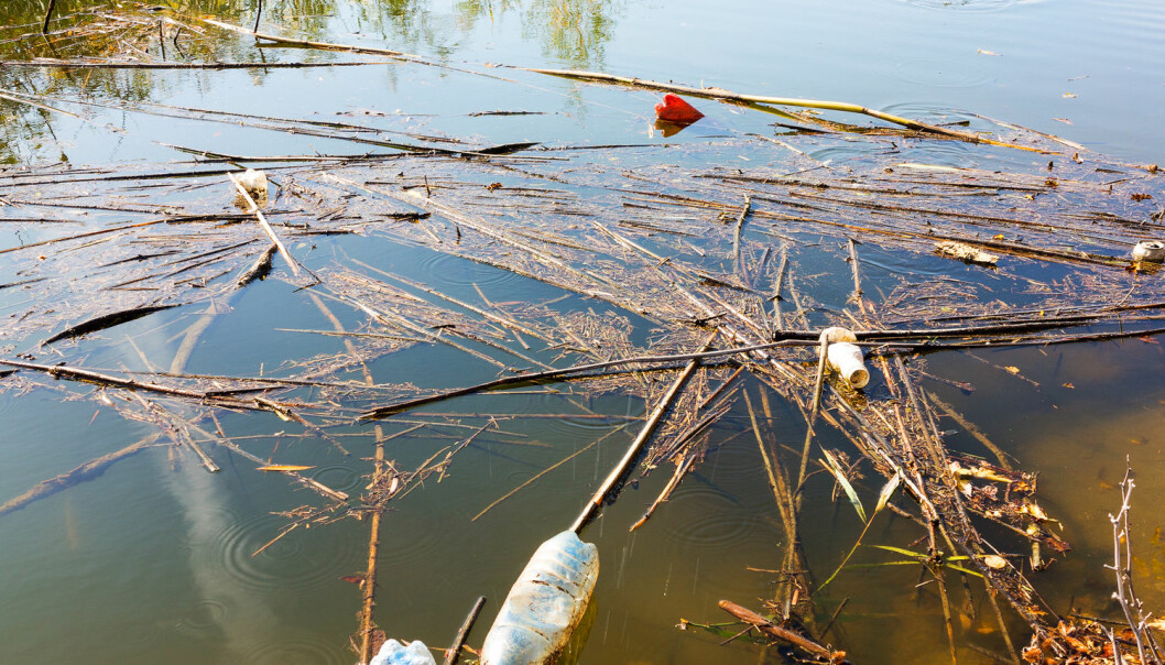 – Elver er fantastiske og komplekse økosystemer i seg selv. Vi bør være like oppmerksomme på plastforurensningens effekter her, påpeker forsker. (Illustrasjonsfoto: Shutterstock / NTB Scanpix)