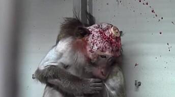 Anerkjent forsker tiltalt for dyremishandling