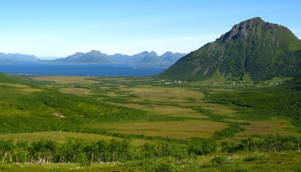 Myrområda i Breidvikdalen, Hadsel, i Nordland. Dei store myrkompleksa i Nord-Noreg bind enorme mengder med karbon som er bygd opp sidan siste istid. (Foto: Anders Bryn)