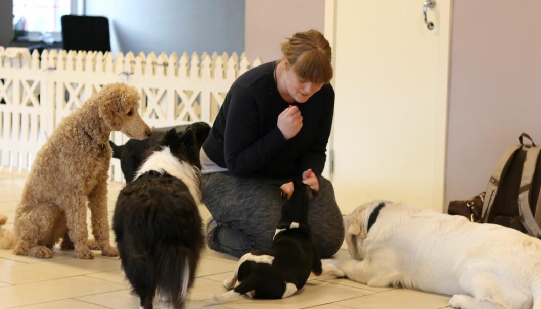 Vi bruker stadig mer på kjæledyrene våre, og det finnes i dag et godt utvalg av tjenester. I Oslo Hundebarnehage holdes hundene i aktivitet mens eierne deres er på jobb. [Foto: Elise Kjørstad]