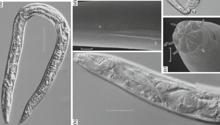 Forskere er begeistret over utrolig gjenoppliving av istidsormer