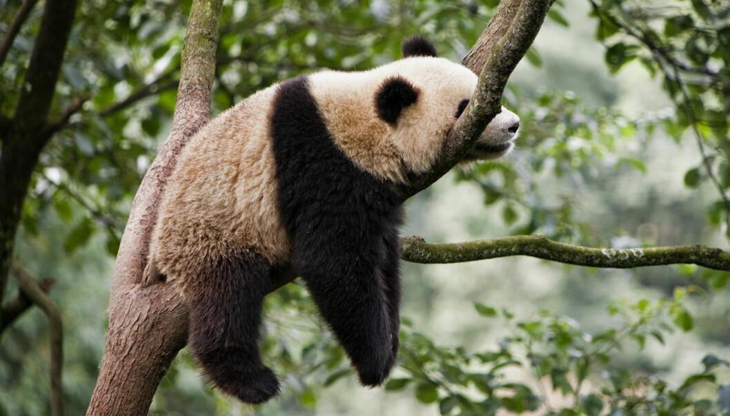 Voksne mennesker sover mye – helst sju-åtte timer i døgnet – men det er ingenting mot rovdyr og dovendyr. (Foto: Shutterstock / NTB Scanpix)