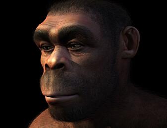 Dette tidlige mennesket kan ha dødd ut på grunn av latskap