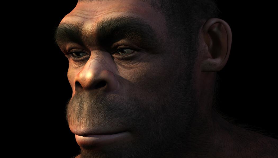 Homo erectus var suksessrike i lang tid, men de utviklet seg for lite til at de klarte seg i nye omgivelser. (Foto: Linda Bucklin / Shutterstock / NTB scanpix)
