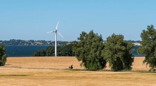 Nær 5 millioner trær har dødd i sommervarmen i Danmark