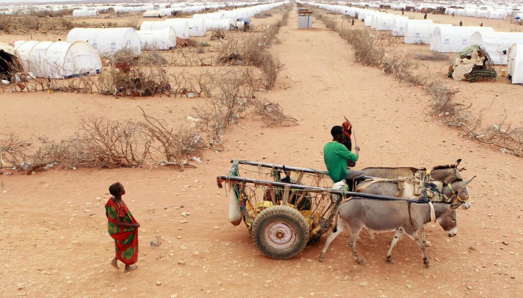 Når tørken rammer, må mange dra fra hjemmene sine. Som denne somalieren i en flyktningleir i Etiopia under sultkatastrofen i 2011. (Foto: Thomas Mukoya/Reuters/NTB scanpix)