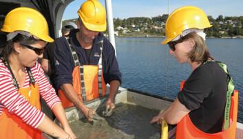 Forskerne Zhanna Tairova, Ketil Hylland og Agathe Bour håndrenser store mengder sedimenter fra fjordbunnen utenfor Drøbak. (Foto: Bjarne Røsjø, Titan)