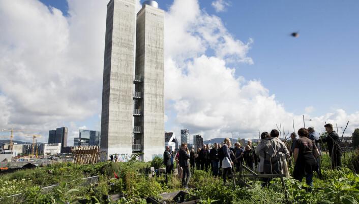 Parsellhagene i Losæter over Operatunnelen i Oslo er et godt eksempel på hvordan urbant landbruk har slått rot i Oslo. (Foto: Håkon Mosvold Larsen / NTB scanpix)