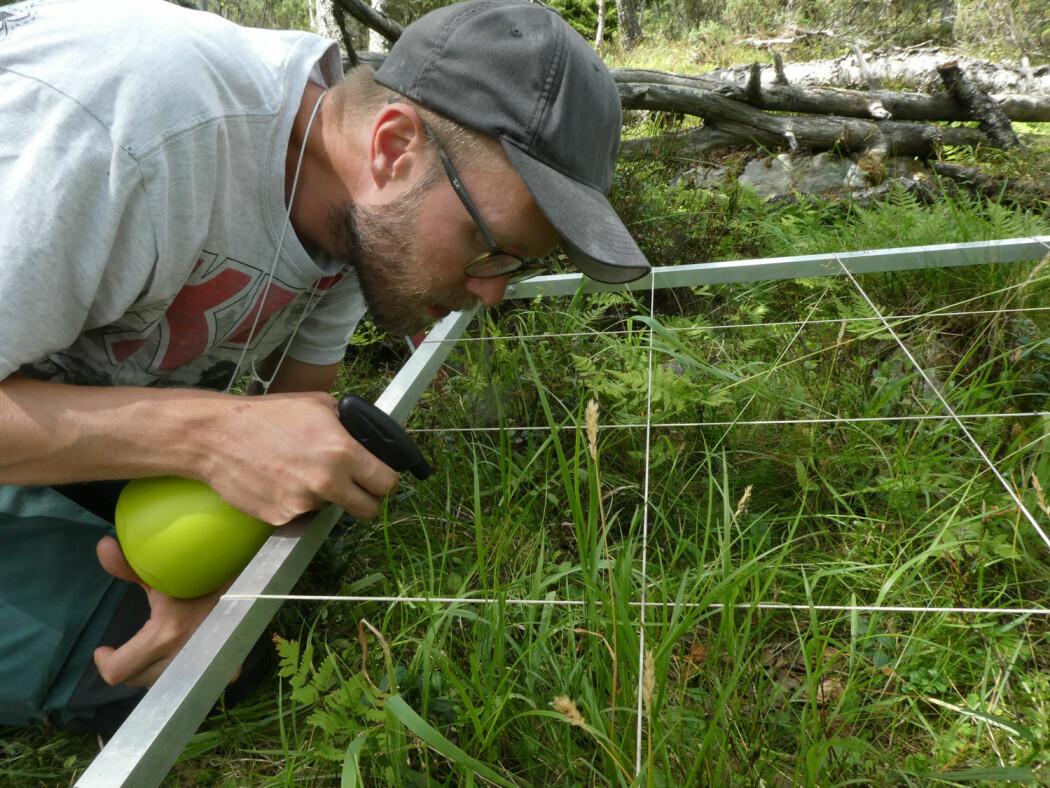 I årets rekordtørre sommer er spruteflaske med vann et viktig verktøy for å få liv i – og dermed kunne artsbestemme - små, tørkeutsatte levermoser. (Foto: Siri Lie Olsen)