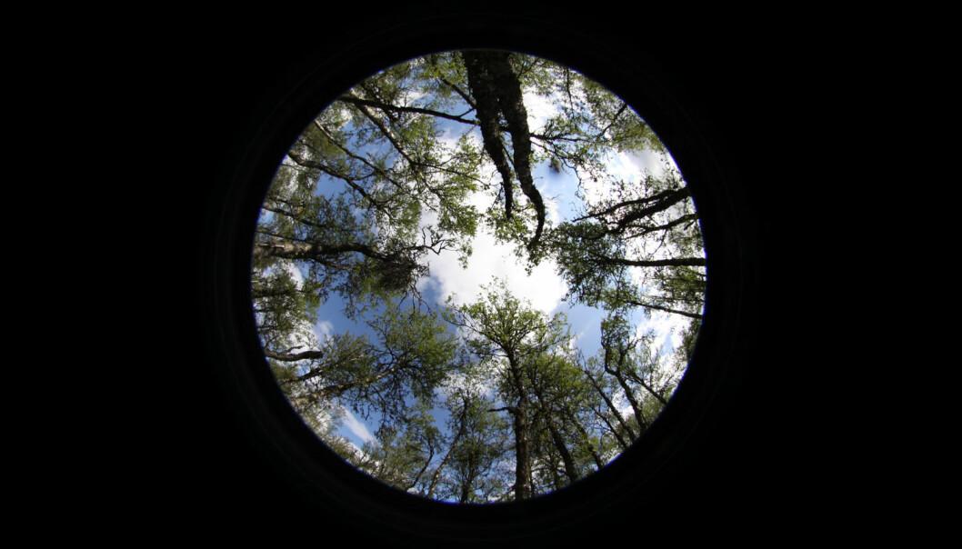 Kamera med fisheye-linse er ikke bare et morsomt leketøy. Vi bruker det for å ta bilde av trekronene og beregne hvor stor andel av himmelen de dekker. Har skogen blitt tettere eller åpnere siden sist? (Foto: Jørn Olav Løkken)
