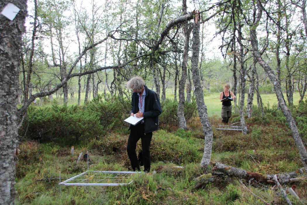 Gjennom jevnlige registreringer av planter, lav, smågnagere og fugl undersøker vi hvordan det står til med norsk natur. (Foto: Jørn Olav Løkken)