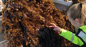 Havets regnskog er et glemt fôrkammer