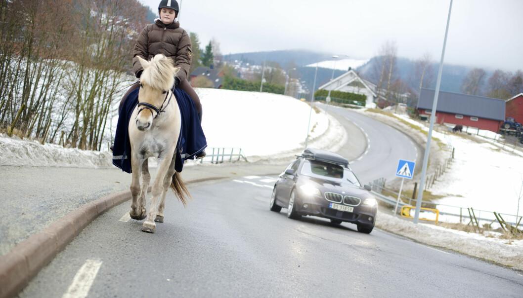I ulykker der hest og bil er involvert er konsekvensene ofte alvorlige. Nå skal Nord universitet forske på hest i trafikken. (Foto: Kari Hustad)