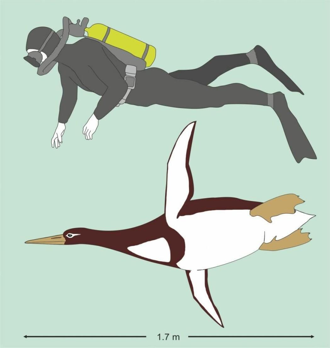 En av de tidligste pingvinene var så stor som et menneske