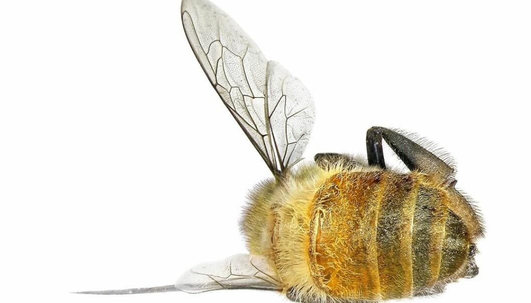 En verden med færre insekter kan bli en sulten verden
