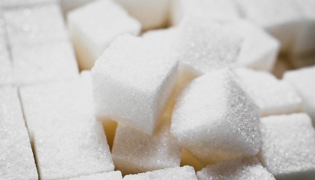 Fettforbrenning kan beskytte kroppen mot gift fra sukker