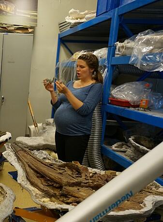 Mage ingen hindring! Omvisning blant fossilene en måned før termin. (Foto: Spitsbergen Mesozoic Research Group)
