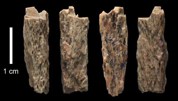 Det er ikke store beinbitene forskerne har å gå ut fra. Likevel kan DNAet avsløre mye om mennesket som en gang eide disse knoklene. (Foto: Max Planck Institute)