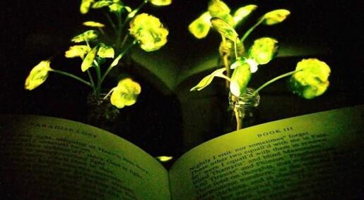 Snart kan vi kanskje bruke planter som leselys