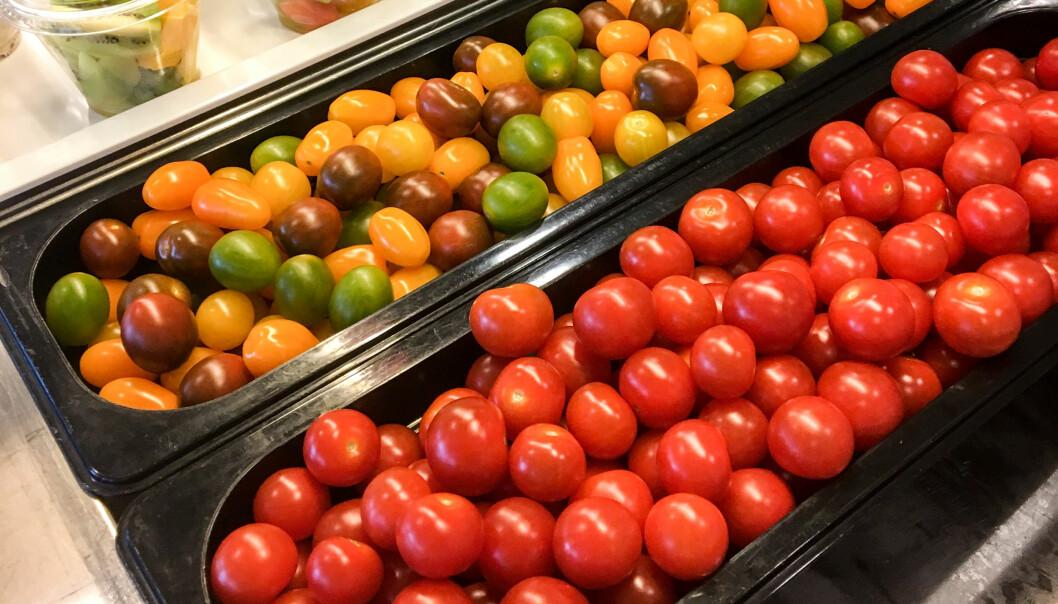 Er det mer fristende å spise mangefargede cherrytomater enn bare røde tomater? Det var bare noe av det forskerne forsøkte å finne ut. (Foto: Jorunn S. Hansen / Nofima)