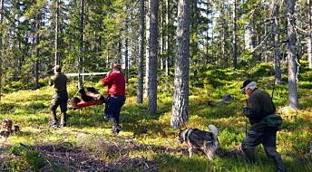 Mye jakt gir færre bjørnunger