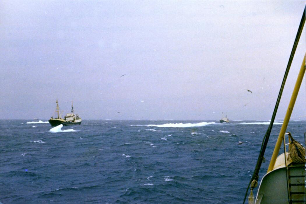 Både i 1970 og i 1971 var flere skip med på hvaltoktet utenfor Labrador. Her er «M/S Tornado» og «M/S Riston» fotografert av Åsmund Bjordal sommeren 1970. (Foto: Åsmund Bjordal)
