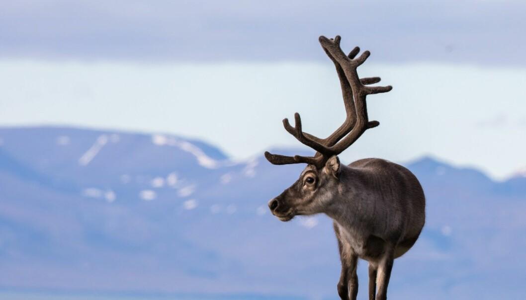 – Det som skjer i Arktis forblir ikke i Arktis. Det påvirker hele planeten. Arktis har stor påvirkning på resten av verden, sier NOAA-sjef Timothy Gallaudet. (Foto: Lillian Tveit, Shutterstock, NTB scanpix)