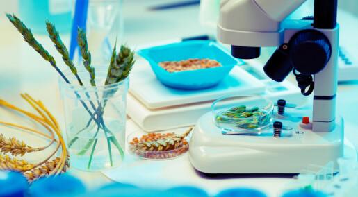 Arvematerialet til hvete er kartlagt – og det er fem ganger større enn menneske-genomet