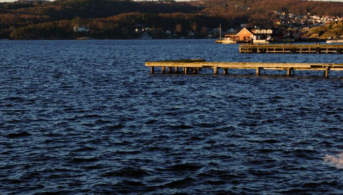 Fjordtorsken på Sørlandet kan forsvinne