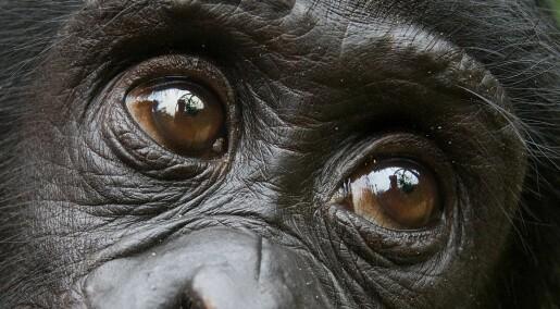 Denne apen hjelper fremmede uten å bli spurt om det