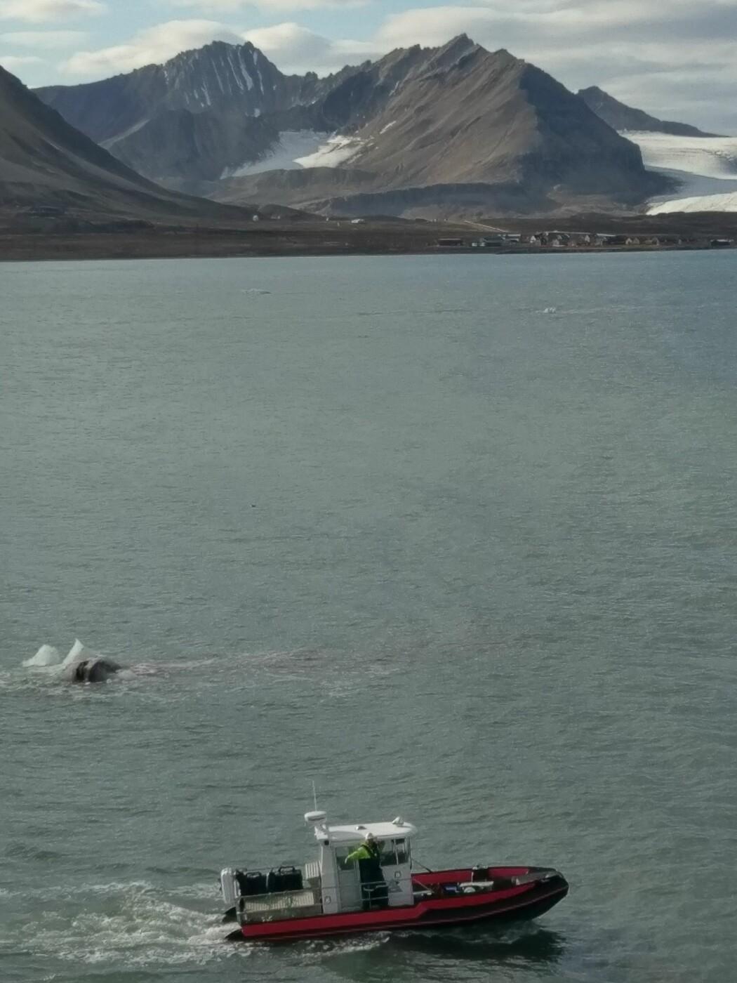 Kobben II med Ny-Ålesund og Brøggerbreene i bakgrunnen. (Foto: Mareano)