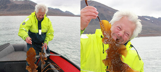 Finner kråkeboller og frodig tareskog på Svalbard