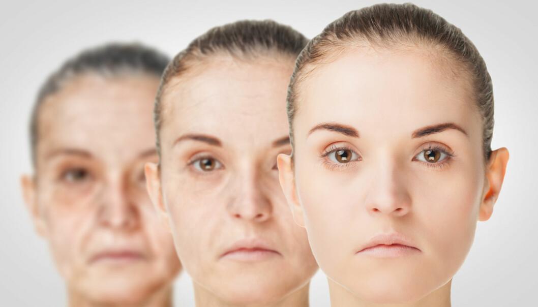 Forskere må helt ned på cellenivå for å forstå prosessene som gjør at vi blir gamle. Først da kan de starte å finne løsninger på aldringsprosessen. (Foto: Shutterstock / NTB Scanpix)