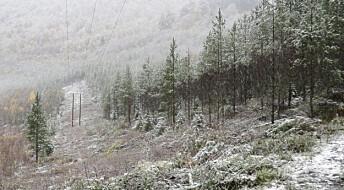 Stutte og butte trær gir færre strømbrudd